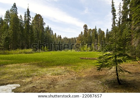 Crescent Meadow in the Sequoia, CA