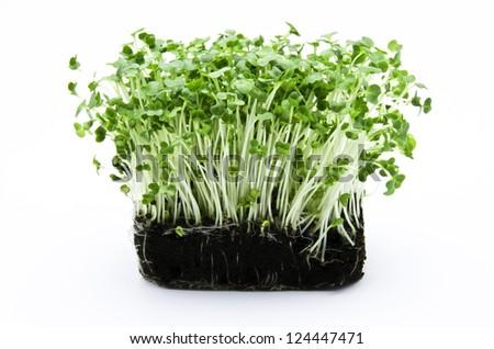 Cress salad - stock photo