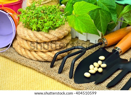 Cress sprouts  with gardening tools on wooden background.