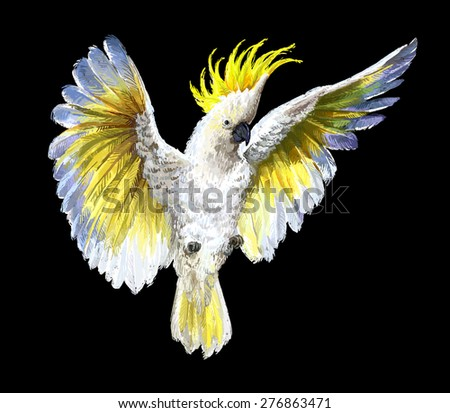 Crested Cockatoo, isolated on black - stock photo