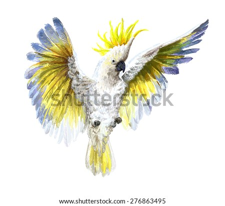 Crested Cockatoo, isolated on white  - stock photo