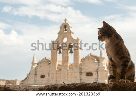 Cretan cat at famous Arkadi monastery, Crete - stock photo