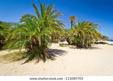Cretan Date palm trees on idyllic Vai Beach, Greece