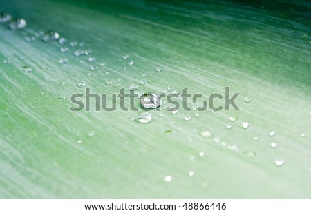 Crisp water droplets on a lush green Agave leaf - stock photo