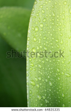Crisp water droplets on a lush green leaf - stock photo