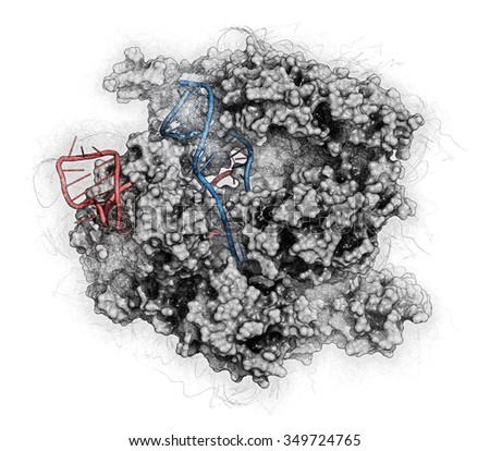 CRISPR-CAS9 gene editing complex from Streptococcus pyogenes. The Cas9 nuclease protein uses a guide RNA sequence to cut DNA at a complementary site. Stylized image. RNA shaded red, DNA blue. - stock photo