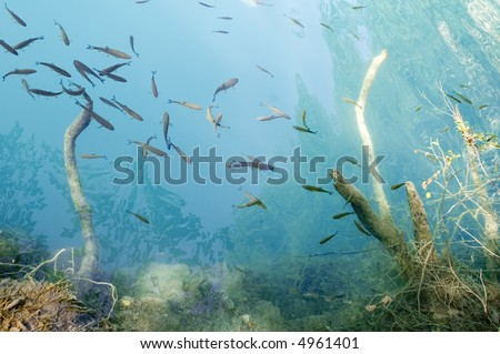 Croatia seaboard Adriatic sea with fish