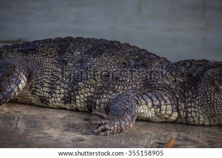 Crocodile. - stock photo