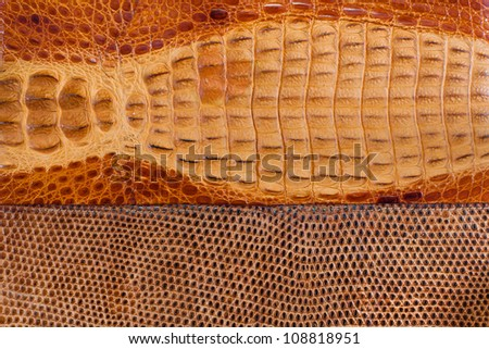 Crocodile and snake leather texture - stock photo