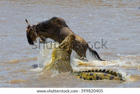 Crocodile attack wildebeest in the Mara river. Great Migration. Kenya. Tanzania. Masai Mara National Park. An excellent illustration. - stock photo
