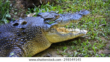 crocodile, australia - stock photo