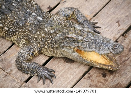 Crocodile baring mouth from aerial view - stock photo