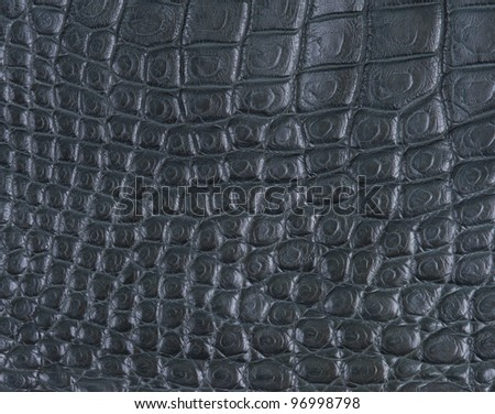 crocodile belly skin texture background