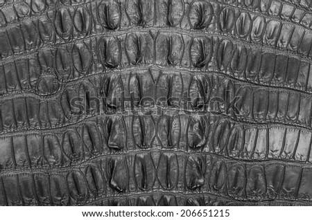 "Crocodile bone skin texture background. This image of Freshwater Crocodile ""Crocodylus siamensis"".This skin is very classic and beauty. - stock photo"