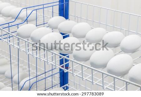 Crocodile eggs in Incubator - stock photo
