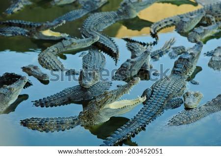 crocodile farm in thailand - stock photo