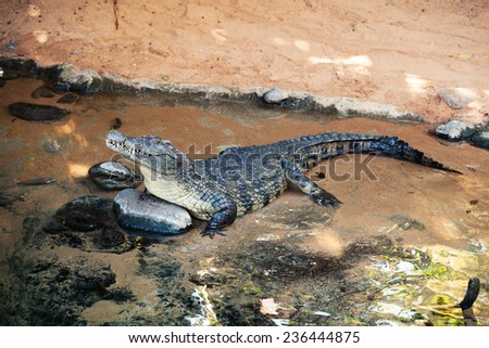 Crocodile in the water. - stock photo