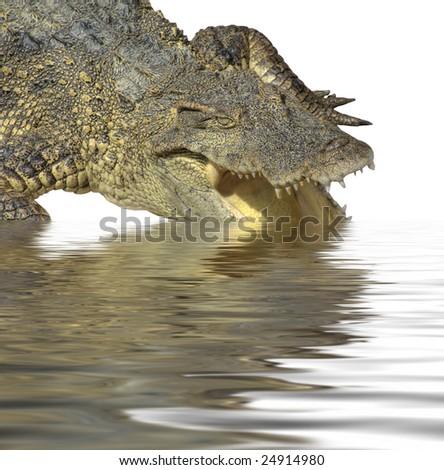 Crocodile in the water - stock photo