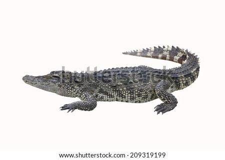 Crocodile on a white background - stock photo