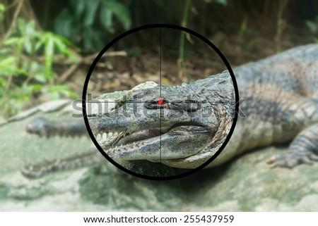 Crocodile on the shooting range - stock photo