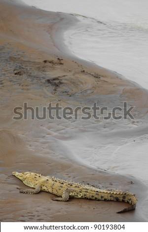Crocodile resting at the riverbank in Costa Rica - stock photo