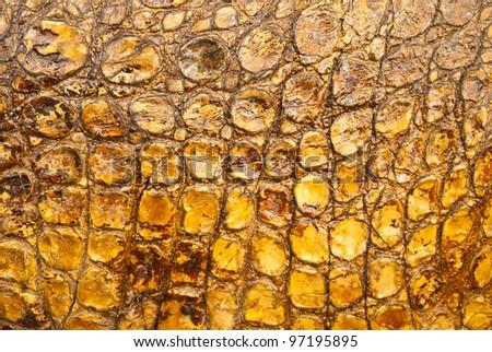 Crocodile skin closeup. - stock photo
