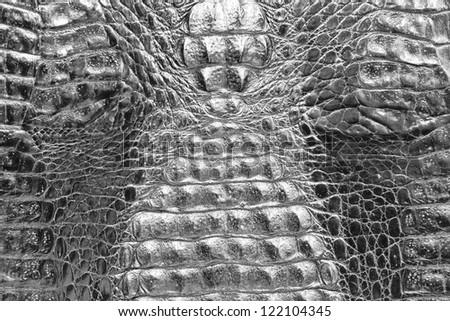 Crocodile skin texture - stock photo