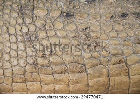 crocodile skin texture background, brown color - stock photo