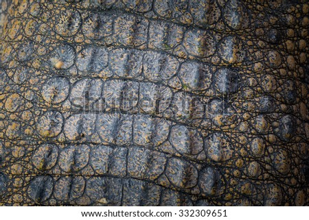 Crocodile skin texture blackground - stock photo