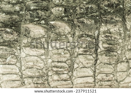 Crocodile skin texture. Shot in South Africa. - stock photo
