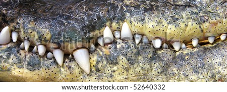 crocodile teeth - stock photo