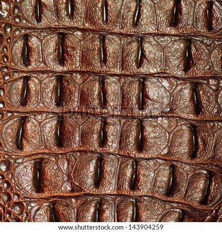 crocodile texture  - stock photo