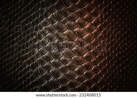 Crocodile two tone skin  texture - stock photo
