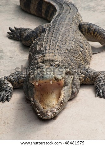 crocodile with open mouth facing the viewer, closeup shot - stock photo