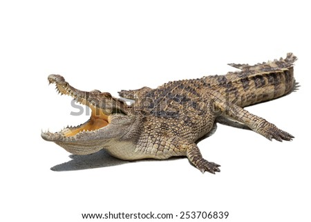 Crocodile with open mouth on white background. - stock photo