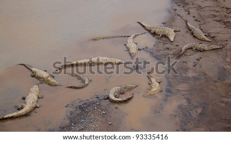 Crocodiles resting at the riverbank in Costa Rica - stock photo