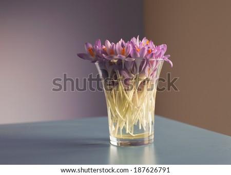 Crocus bouquet - stock photo