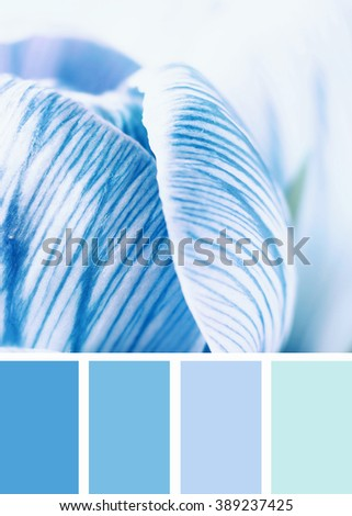 Crocus flower blossoming in the spring. Color palette swatches. - stock photo