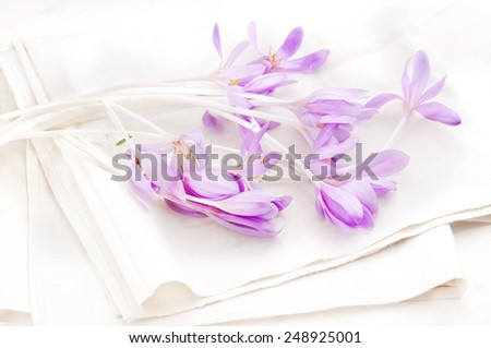 crocus on table cloth, easter decor, table decor,mother day, 8 march,spring flower,autumn flower,alpine flower switzerland alpine flower - stock photo