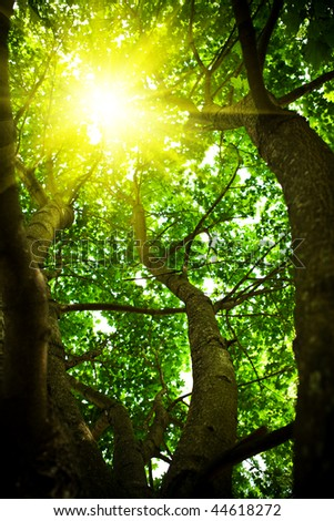 Crone of a tree with the looking through sun - stock photo