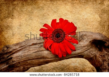 Crooked driftwood with red flower in grunge. - stock photo
