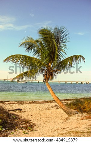 Crooked palm tree in foreground with emerald waters of Bahia Honda Channel and bridge in background.
