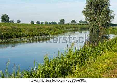 Crooked willow tree reflected in the background of a small stream on a windless day in the summer season. - stock photo