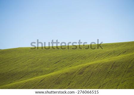 Crop field - stock photo