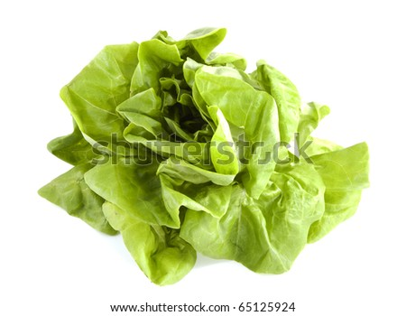 Crop lettuce on a white background. - stock photo