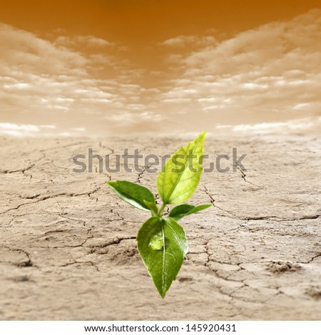 crop of water and green leaf  - stock photo