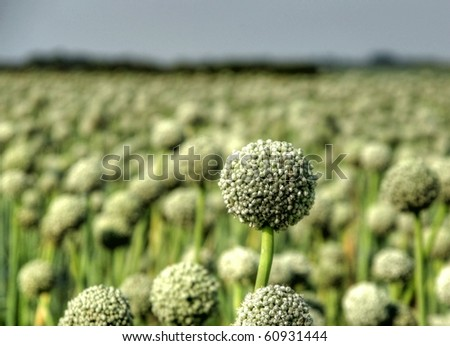 crop on farmland - stock photo