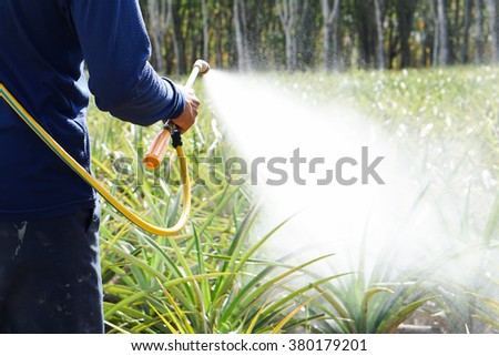 crop spraying in the pineapple fruit field - stock photo