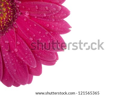 Cropped image of pink daisy with water droplets - stock photo