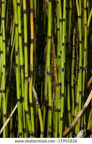 Cropped shot of green bamboos, suitable for backgrounds.